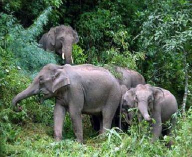 Kde žije slon, zjistíte jeho jménem