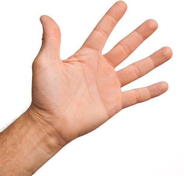 Co dělá dlaň ruky? Sen vaše dlaně: význam spánku