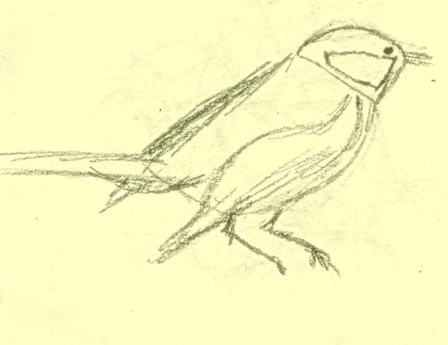 nakreslit vrabce