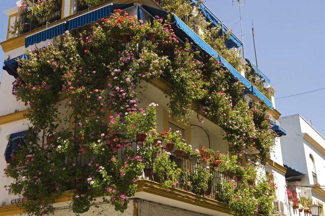 Jaké květiny rostou na balkoně, aby rozkvétaly celé léto: jména
