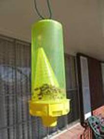 Pasce pro včely. Informace pro začátečníky včelařů