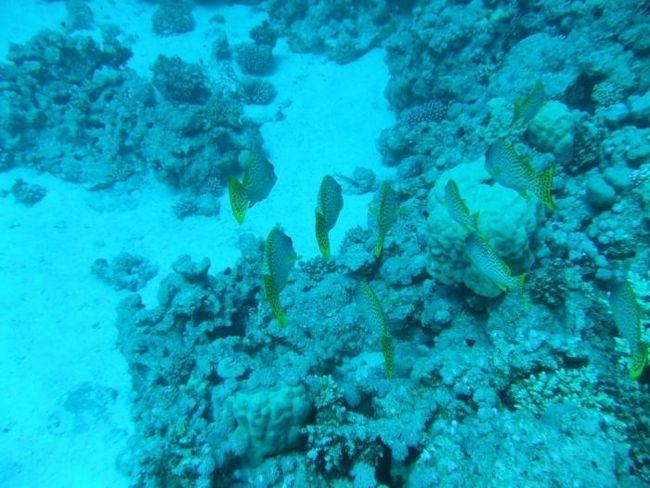 Odpočiňte na Rudém moři. Co je lepší, Hurghada nebo Sharm el-Sheikh?