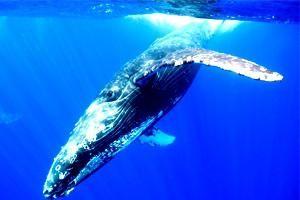 Páni moře: o tom, kde žije velryba a proč je vyhozena na zemi